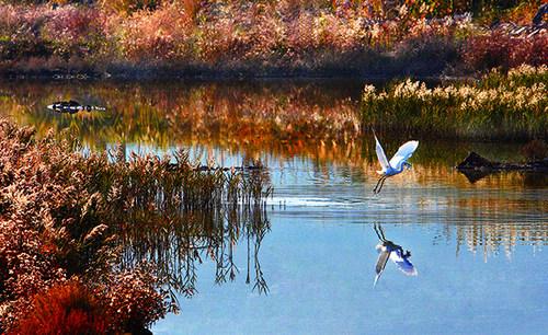 漩门湾湿地公园