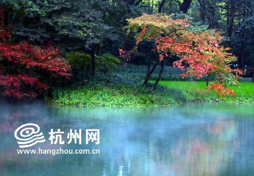 """都说""""霜叶红于二月花"""",经过低温的""""洗礼"""",杭州太子湾公园和花港观鱼"""