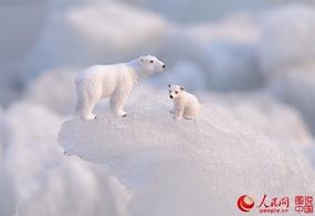 松花江上的北极熊