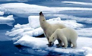 警告!全球变暖将超联合国专家预测