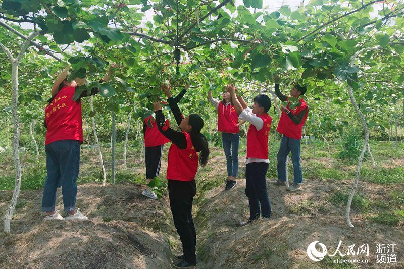 龙泉市城北乡党员干部正在为农户进行人工授粉