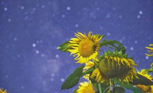 让花儿与繁星同框