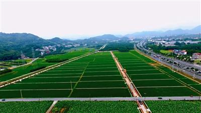 杭州富阳新登镇对标一流抓项目