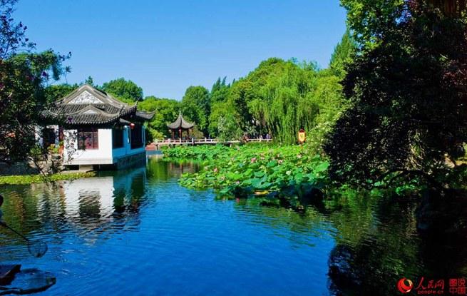 七月,上海古猗园荷花绽放喜迎盛夏