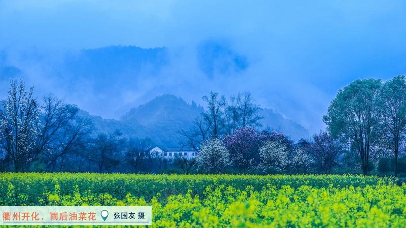 衢州开化,雨后油菜花。